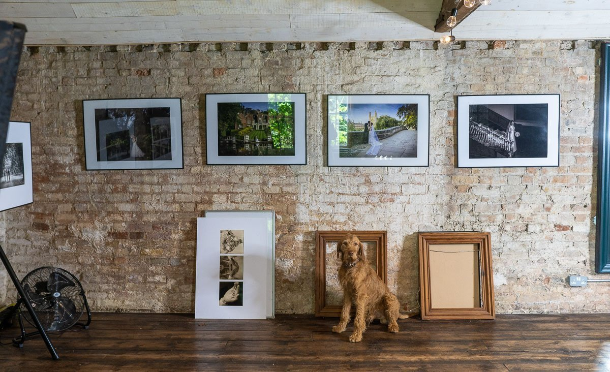 dog standing infront of picture frames at our cambridge wedding photography studio