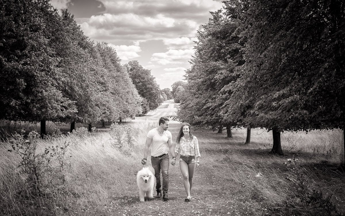 Couple walking together with their white fluffy dog taken during their pre-wedding shoot in Cambridge