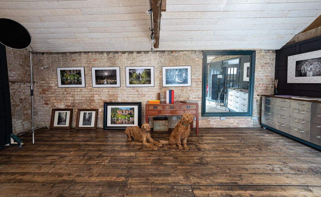 Two of our studio dogs in our unusually clean wedding photography studio